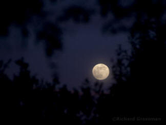 First Full Moon of 2007